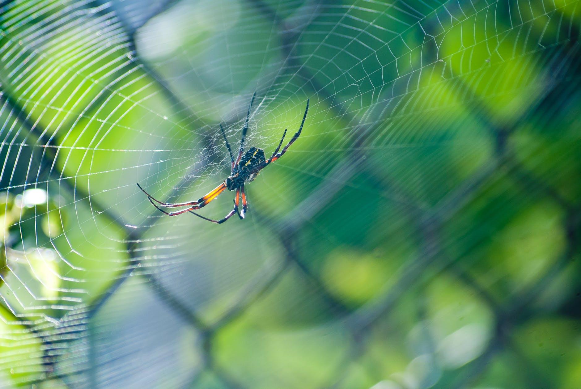 abstract arachnid blur bright