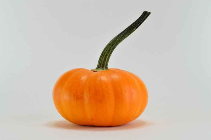 close up photography of a pumpkin