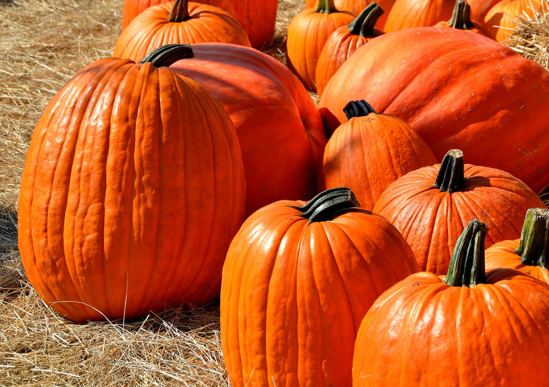 close up photography of pumpkins